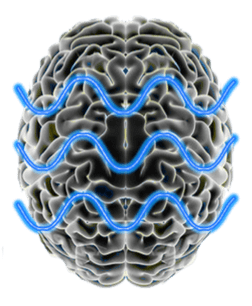 cerebroarmonioso